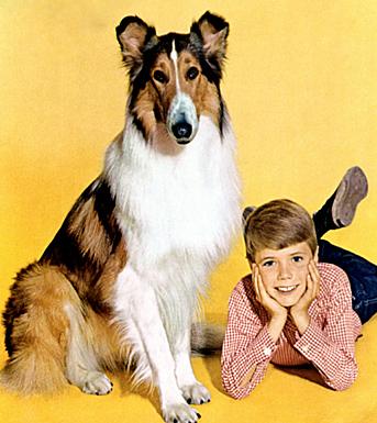 01-tvpets-lassie2.jpg