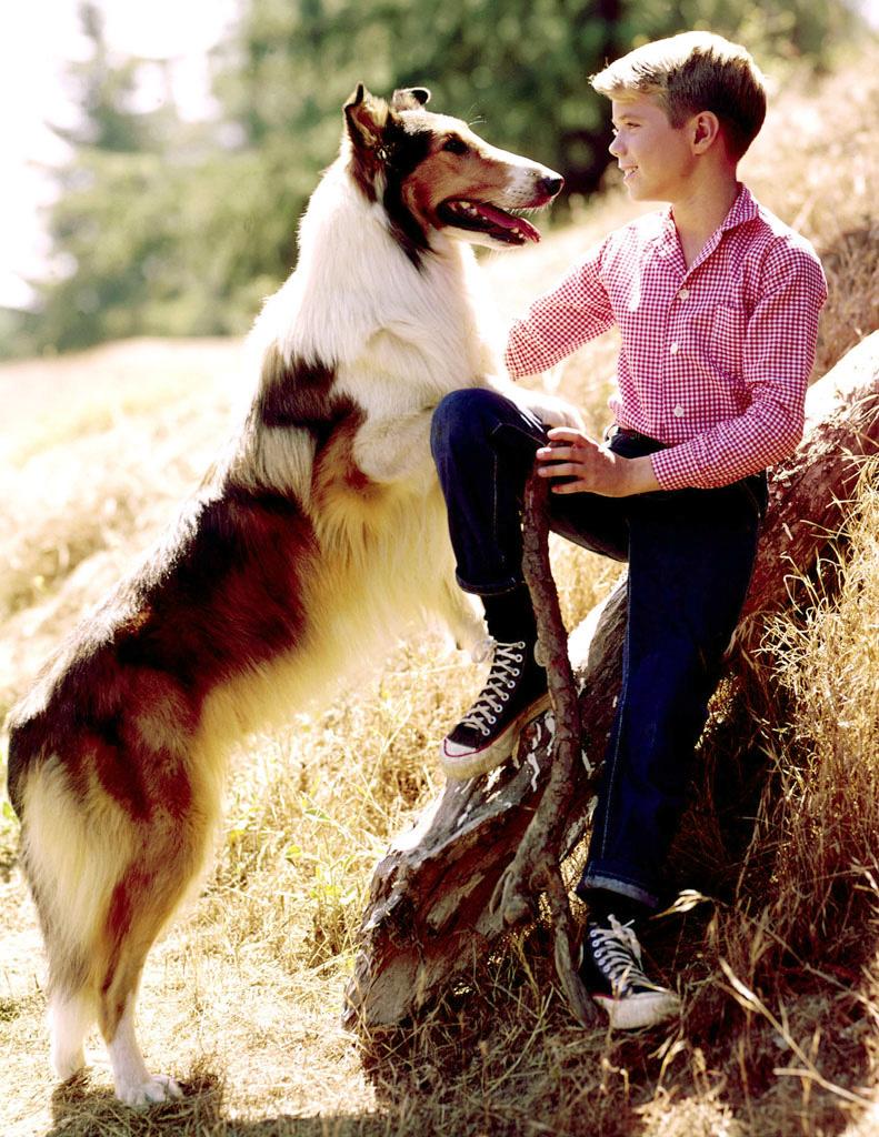 greatest-tv-pets-lassie.jpg