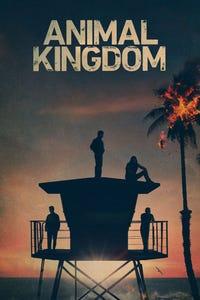 Animal Kingdom as Deran Cody