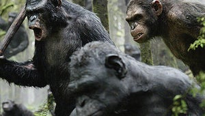 Box Office: Planet of the Apes Continues to Dominate