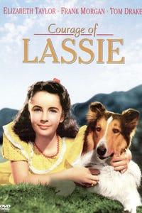 Courage of Lassie as Peter Merrick