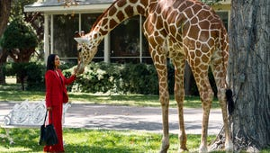 Rosario Dawson Is Solving Murders and Petting Giraffes in First Briarpatch Trailer