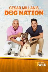 Cesar Millan's Dog Nation