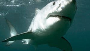 Top Videos: Shark Week, a Breaking Bad Musical, The Office Audition Tapes