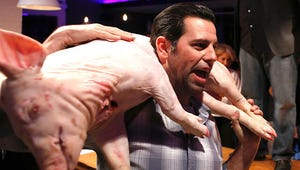 Exclusive Video: Knife Fight Goes Hog Wild!