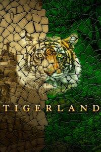 Project C.A.T. - Eine Zukunft für Tiger