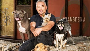 Exclusive Video: Cesar Millan Takes on Stray Mutt in New Series Leader of the Pack
