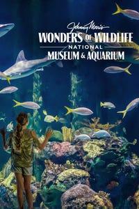 Johnny Morris' Wonders Of Wildlife
