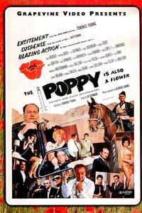 The Poppy Is Also a Flower as Gen. Bahar