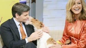 Top Videos: Courtney Love's New Web Series, Westminster Dog Show, Ellen Plays Giant Jenga