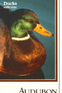 Audubon Video: Ducks Under Siege