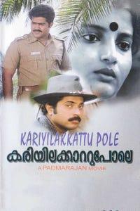 Kariyila Kattu Pole as Film director Harikrishnan