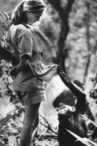 Jane Goodall as Herself