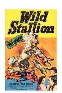 Wild Stallion as Dan Light