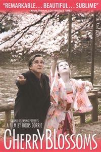 Cherry Blossoms as Franzi
