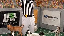 Puppy Bowl VIII Brings Necessary Ruffness to Super Sunday
