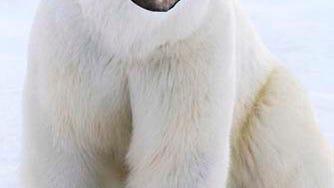 malvo-polar-bear2.jpg