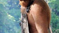 Survivor's Ralph: I Wish I Had Played Dirty