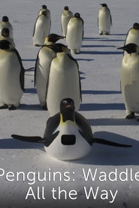 Penguins: Waddle All the Way