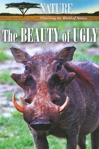 Nature: The Beauty of Ugly as Narrator