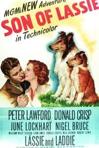 Son of Lassie as Anton