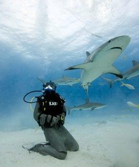 Shark Week 2008 - MythBusters
