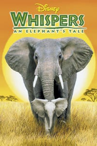 Whispers: An Elephant's Tale as Groove