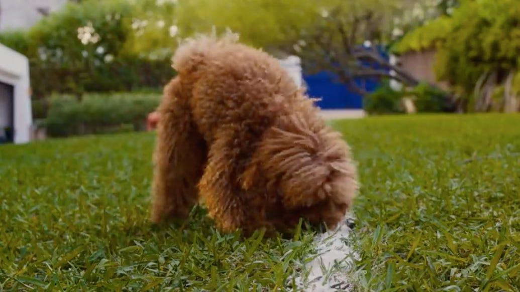 200514-dog.jpg