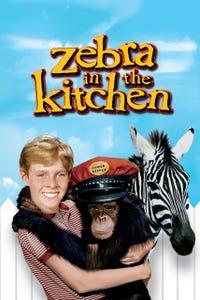 Zebra in the Kitchen as Mr. Richardson