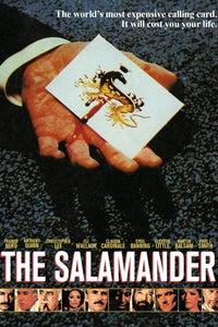 The Salamander as Director Baldassare