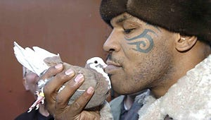 PETA: Mike Tyson's Pigeon-Racing Show Cruel and Likely Illegal