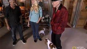 Exclusive Video: Dog Whisperer's Cesar Millan Visits Hugh Hefner and His Girlfriend