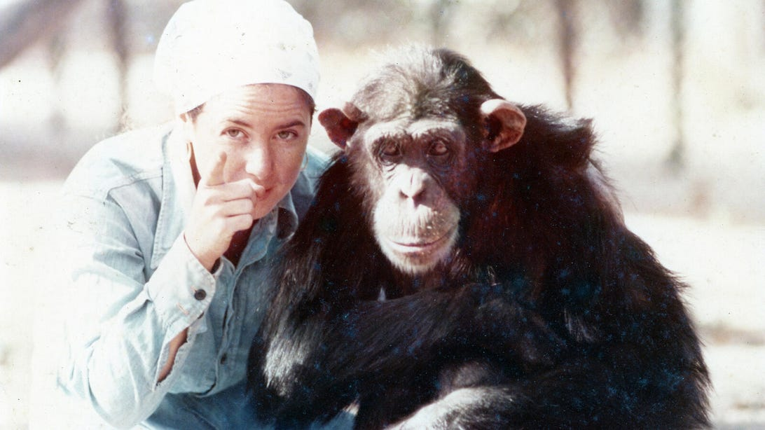 Janis Carter, Lucy Temerlin, Lucy the Human Chimp