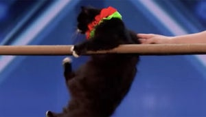 America's Got Talent: These Insanely Acrobatic Cats Will Surely Make Your Day