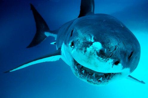 Shark Week 2008