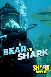 Bear vs Shark